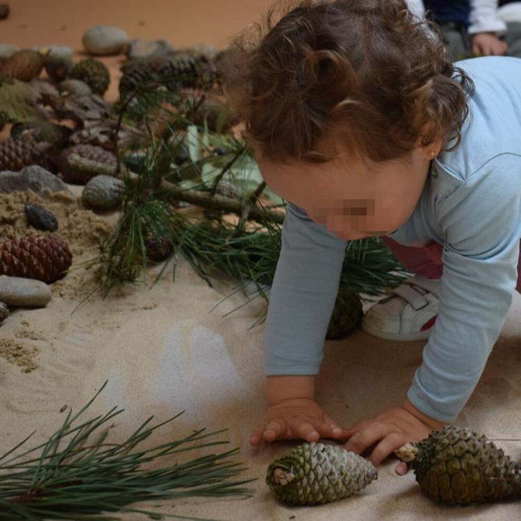Piélagos pone en marcha las primeras 'Ecoescuelas' de Cantabria