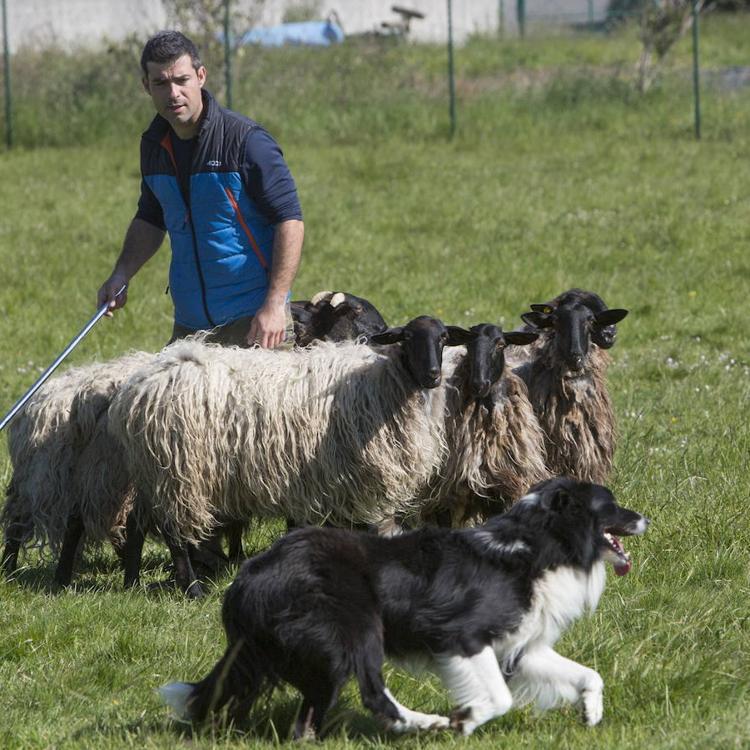 Cantabria quiere promover el pastoreo de montaña para generar riqueza en zonas despobladas