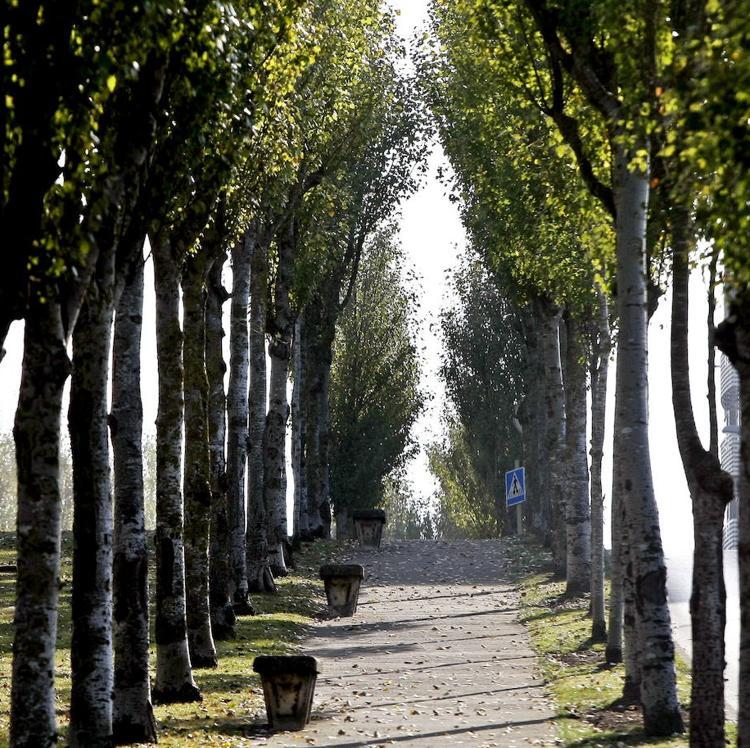 Torrelavega incrementará las zonas verdes y el arbolado