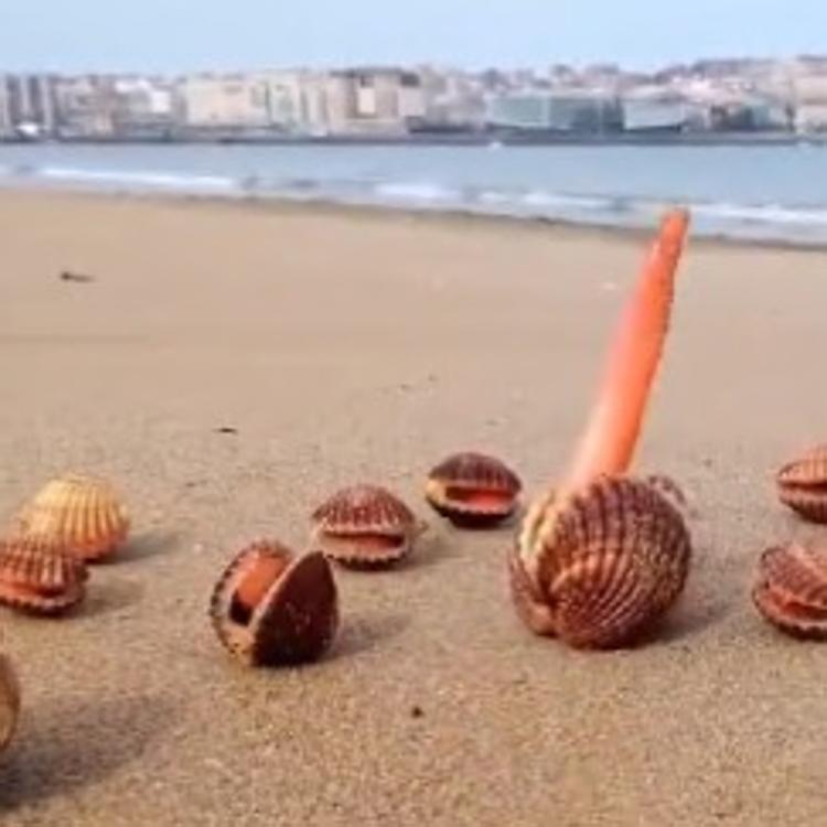 Una marea de coeficiente 105 deja al descubierto los páramos de la bahía de Santander con la bajamar
