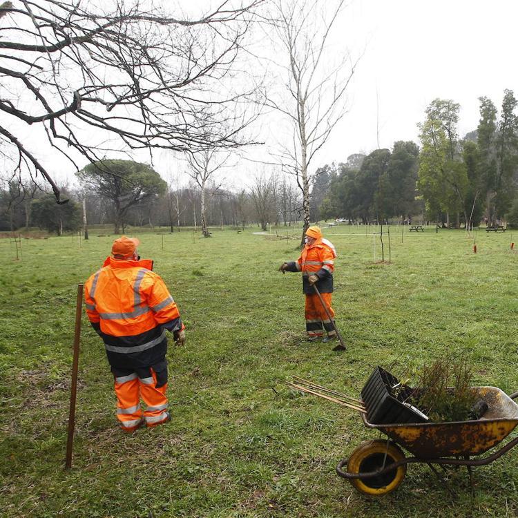 ACpT pide normas de uso para La Viesca y retirar la «barbaridad» de árboles plantados
