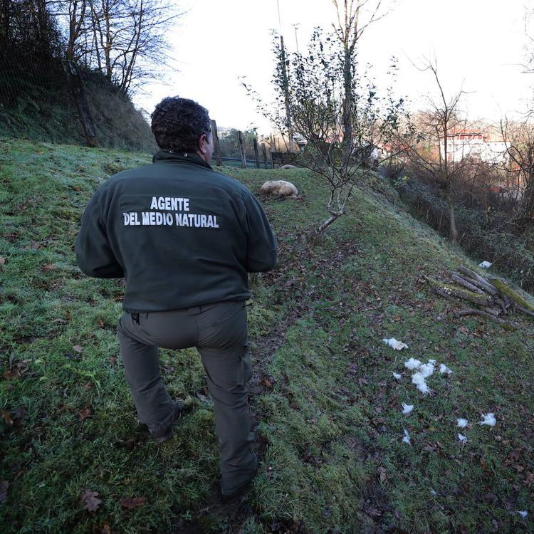 Diez autonomías firman un manifiesto contra la protección del lobo ibérico