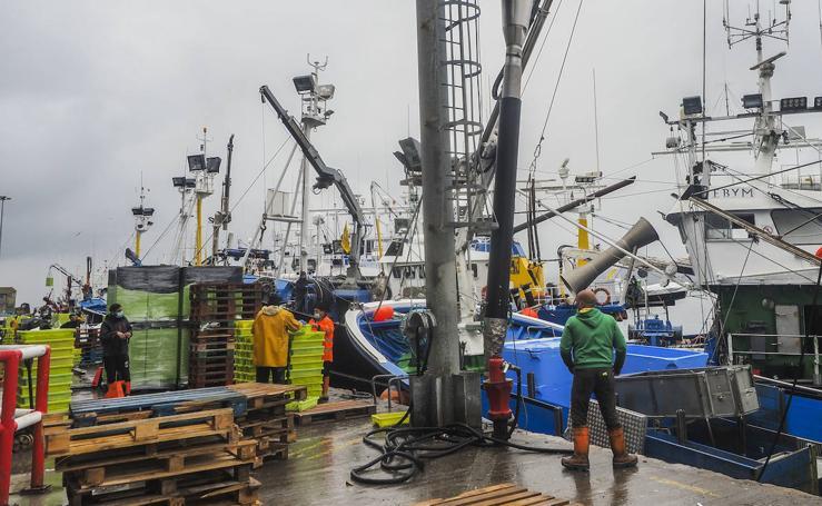 Santoña subasta más de medio millón de kilos de bocarte, el récord de la costera