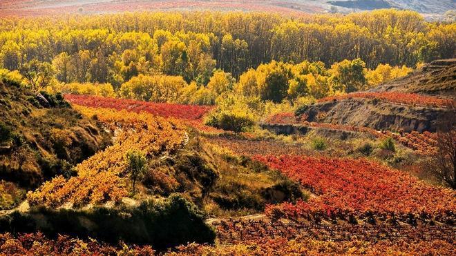 La Rioja, tierra de vinos