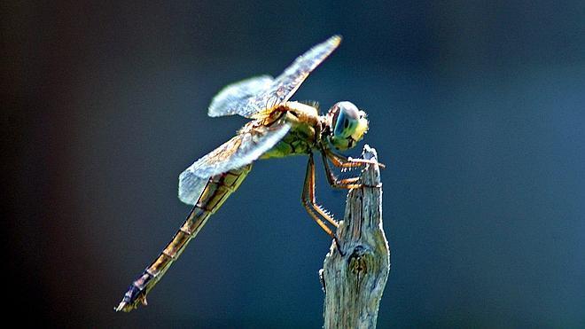 Los primeros insectos nacieron hace 480 millones de años