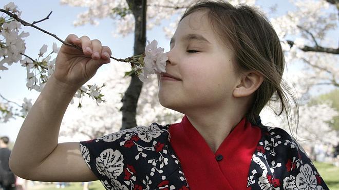Pérdida del olfato y gusto, ¿cuál pueder ser la causa?