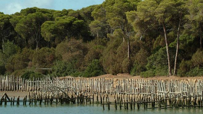 La gestión del agua pone a Doñana contra las cuerdas