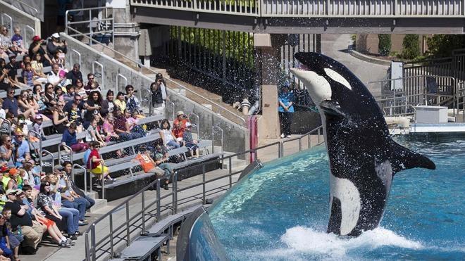SeaWorld dejará de usar orcas en sus espectáculos acuáticos
