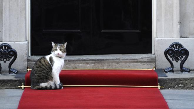 David Cameron se muda, pero el gato Larry se queda en la residencia