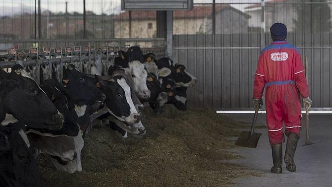 El precio de la leche en Cantabria continúa en mínimos anuales, a 0,43 euros por litro