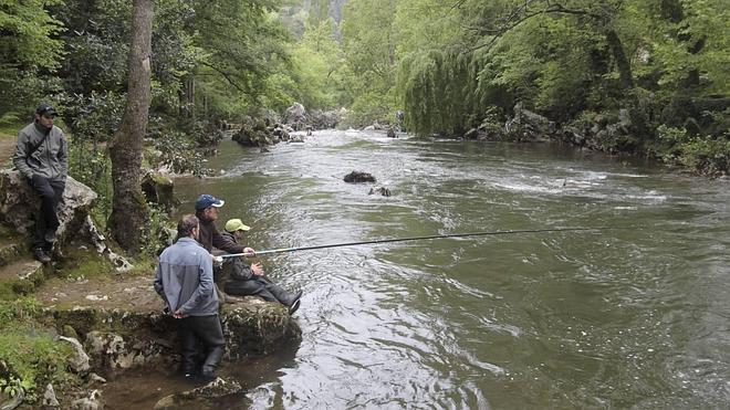 Aumentan los cupos de salmón en el Asón y el Pas para mejorar la especie