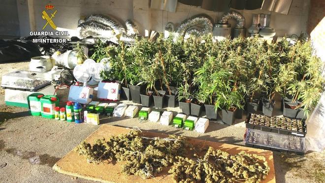 Detenida una pareja por cultivar marihuana en una vivienda de El Tojo