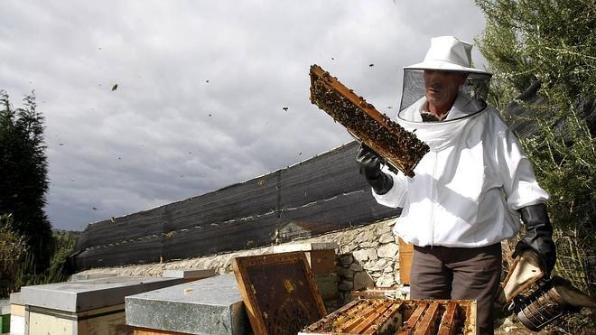 El calor, la varroa y la avispa asesina desploman la producción de miel