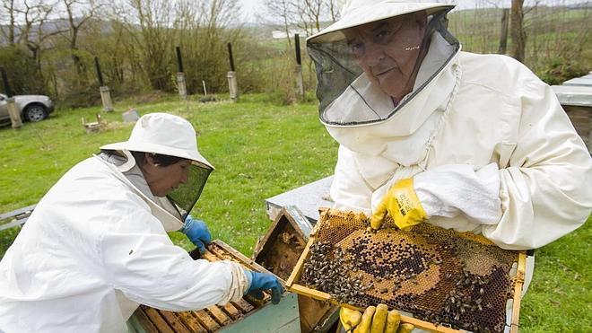 La avispa asiática amenaza al sector mielero de Campoo