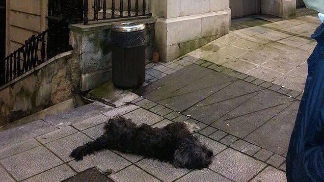 El hombre que mató a un perro a patadas en la calle Rualasal será juzgado este lunes
