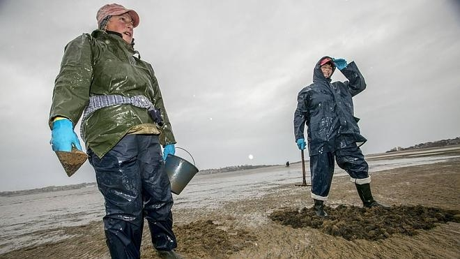 Cantabria veda los bancos marisqueros de Santander y Santoña por la repoblación de almeja
