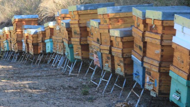 Miles de abejas aparecen asfixiadas en un colmenar de Camaleño
