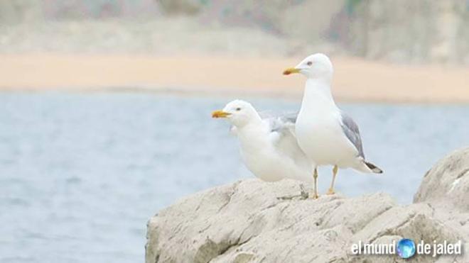 Solos en la playa de Cerrias