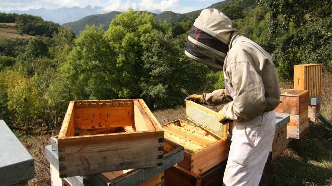 La Feria de la Miel de Vega de Liébana reunirá a 24 productores y 22 artesanos