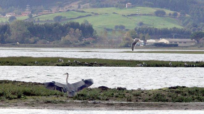 El X Festival de la Migración de las Aves será del 16 al 18 de septiembre