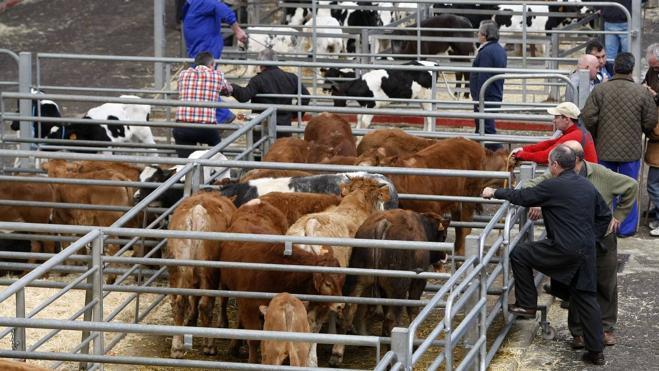 Los ganaderos convocan una manifestación para pedir respeto al mundo rural
