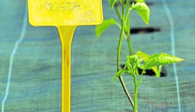 Pasión por la agricultura ecológica